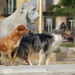 Napoli Dogs